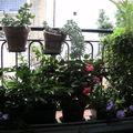 Jardinières d'été (1)