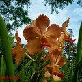 orchid_35