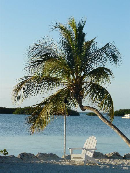 Les palmiers et la plage...