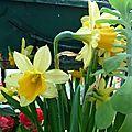 Mes jardinières en avril