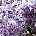 fleurs et jardin (12)