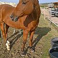 Vers une équitation