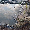 Le jardin à thème -la petite mare-