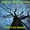 LABEL Arbres remarquables