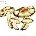 Ki-no-ko Fungi