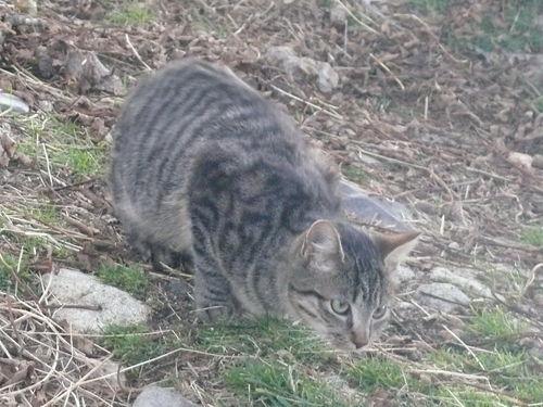 2008 10 25 Le chat qui en surveille un autre