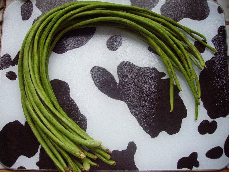 Haricots verts longs