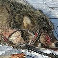 #event : protect america's #wolves #unitedstates : mails