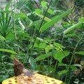Mangeoire distributeur de nectar - eau + miel et fruits
