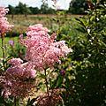 Jardin Plume 11 7 2008 199