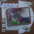 Jerry, le chat de Martine