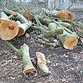 Quartier drouot - arbres abattus...