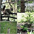 Wild animals in Wenatchee National Forest