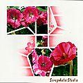 4 Kit Créé 2012 Roses trémières