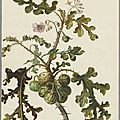 Nationalmuseum Sweden announces new acquisition: A botanical study by Herman Saftleven
