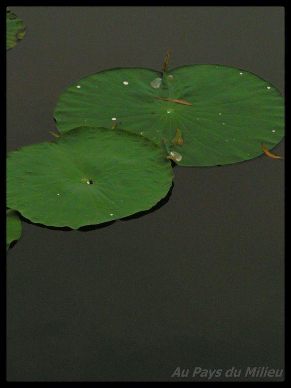 Hangzhou Xihu Saison des Lotus 02