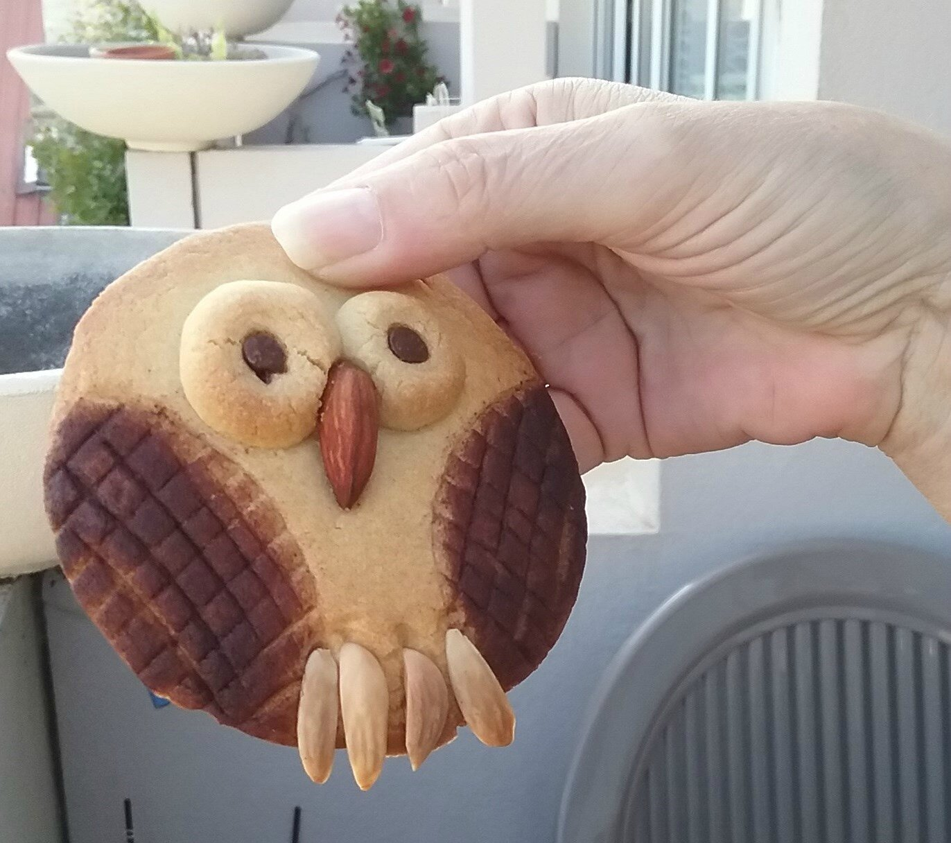 BISCUITS CHOUETTES