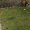 Une halte au jardin