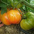 Tomates !