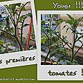 Nos premières tomates !