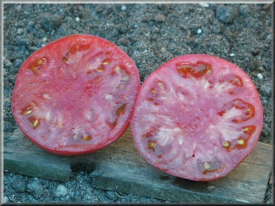 7 - tomate caspienne rose - www.passionpotager.canalblog.com
