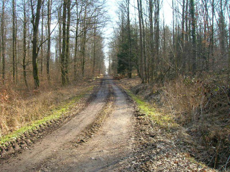 A9 - Toujours en forêt