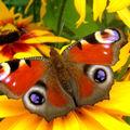 Butterfly (165)