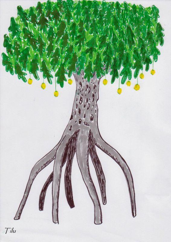 mangrovillier (3)