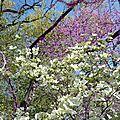 Ny 5# : central park, tartan day et high line...