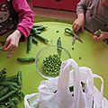 Un legume de saison : le petit pois.