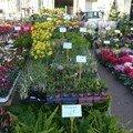 Mimosas, jacinthes et tulipes