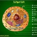 الخلية الحيوانية