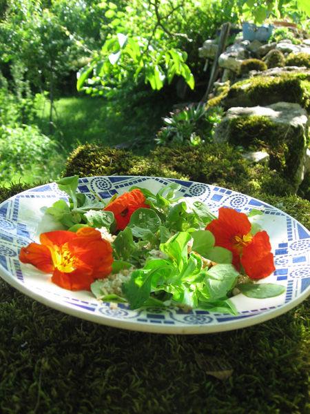 Salade aux capucines