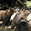 Maman ours et ses deux petits