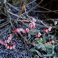 13 11 09 botanisk hage (45)