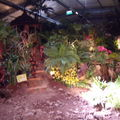 Floralies 185
