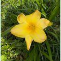 Fleurs du 25 juin 2010