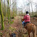 Balade à cheval dans la forêt P1080207