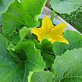 COURGETTES 5