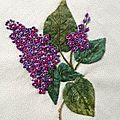 New Hampshire _Lilas pourpre_