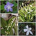 Fleurs du jardin (15)