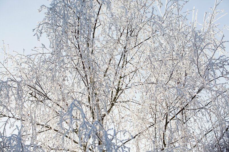 arbre-givre-15-02