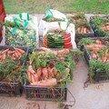 Qui a dit que les legumes bio etaient petits ???