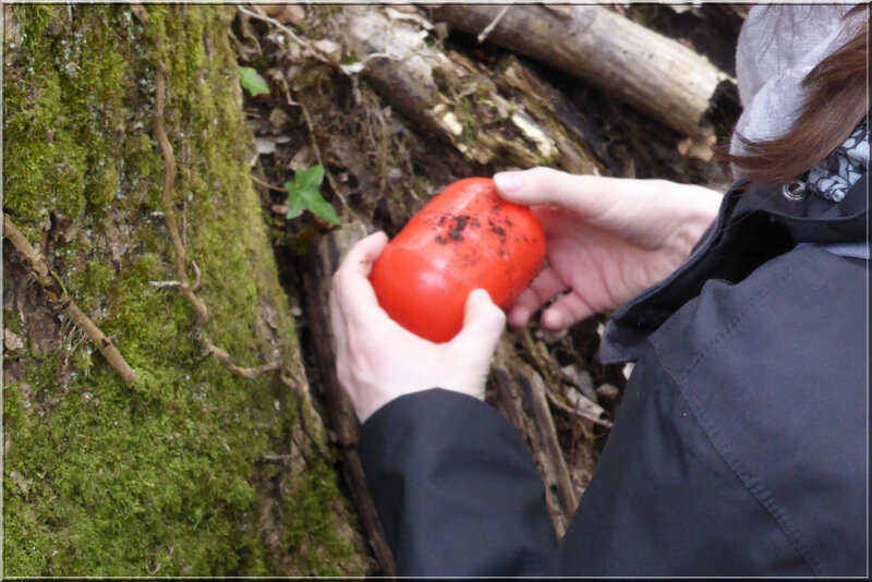 Geocaching foret d'Orleans (12)