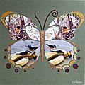 butterfly sachana