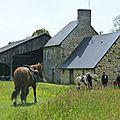 balade à cheval médiévale - Abbaye de Hambye (206)