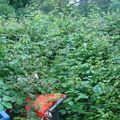 Jardin etape 1