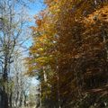 2009 10 28 Paysage d'automne (6)