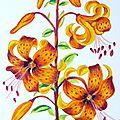 Dessin aux pastels secs : bouquet fleurs de lys