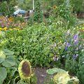 2009 09 02 Une partie de mon jardin (2)
